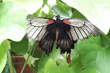 L'Ile aux Papillons, La Gueriniere, France