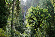 Munson Creek Falls, Tillamook, United States