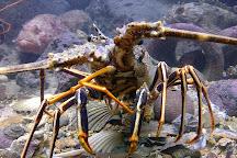 Rovinj Aquarium (Ruder Boskovic Institute), Rovinj, Croatia