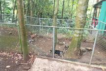 Treetop Adventure Park, Dennery, St. Lucia