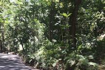 Fern Gully, Ocho Rios, Jamaica