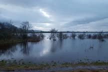 Errew Abbey, County Mayo, Ireland