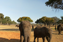 Wild Is Life Trust and ZEN, Harare, Zimbabwe