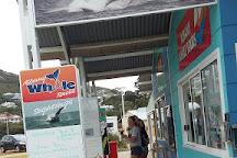 Albany Whale Tours, Albany, Australia