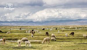 Colca Peru Tours 3