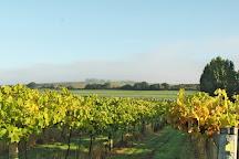 Highdown Vineyard, Worthing, United Kingdom