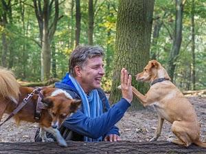 Hundetrainer | Stefan Thal