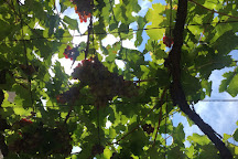 Winery Garnet, Virpazar, Montenegro