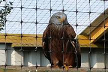 Falconry Days, Hexham, United Kingdom