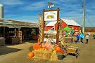 Ort Farms