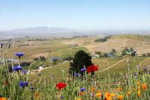 DeMorgenzon Winery, Stellenbosch, South Africa