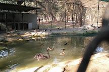 ChhattBir Zoo, Panchkula, India
