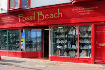 Fossil Beach, Weymouth, United Kingdom