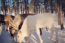 Angeli Reindeer Farm, Inari, Finland