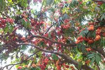 Waghai Botanical Garden, Saputara, India