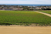 The Flower Fields at Carlsbad Ranch, Carlsbad, United States