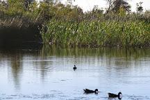 Cool Dingo Tours, Fraser Island, Australia