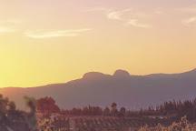 Mellasat Vineyards, Paarl, South Africa