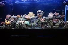 Golden Aquarium chicago USA