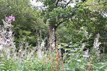 Hockley Woods, Hockley, United Kingdom