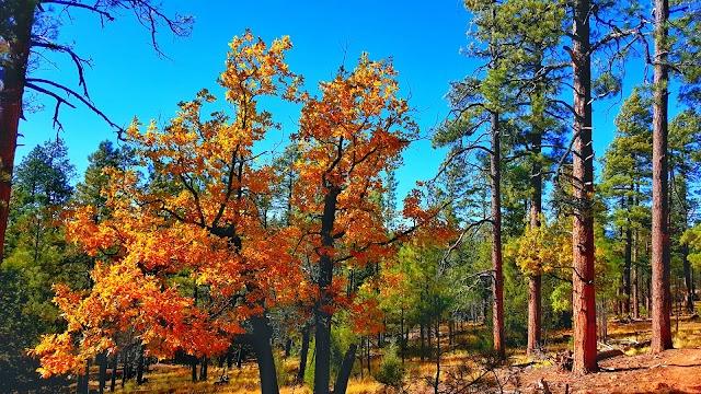 Arizona Trail Trailhead, Marshall Lake