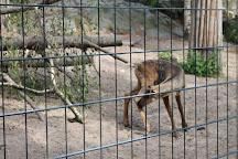 Korkeasaari Zoo, Helsinki, Finland