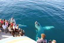 Whalesong Cruises, Urangan, Australia
