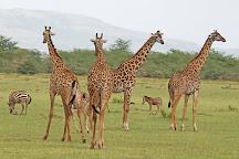 Papio Africa Holidays, Nairobi, Kenya