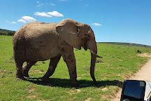 CrissCross Adventures, Addo Elephant National Park, South Africa