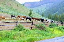 Teton National Forest, Cody, United States