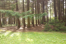 Broxa Forest, Scarborough, United Kingdom