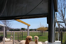 LondonDairy Alpacas, Two Rivers, United States