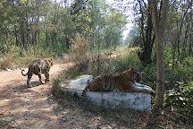 Tiger and Lion Safari, Shimoga, Shimoga, India