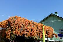 Pine View Nursery, Kalimpong, India