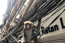India City Walks, New Delhi, India