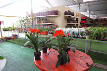 Utopia Orchid Park, Bahan, Israel