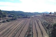 Ametller, La Morera de Montsant, Spain