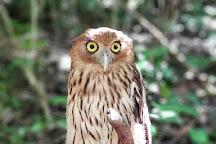Loboc Wildlife & Nature Park, Bohol Island, Philippines