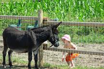 Calgary Farmyard, Calgary, Canada