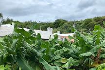 Somers Garden, St. George, Bermuda