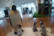 Museum d'Histoire Naturelle, Le Havre, France