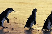 Phillip Island Tours, Williamstown, Australia
