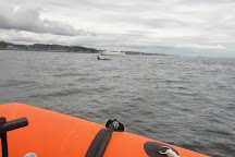 Ocean EcoVentures Whale Watching, Cowichan Bay, Canada