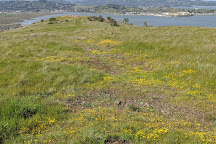 Ring Mountain Open Space Preserve, Corte Madera, United States
