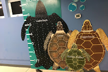 Navarre Beach Sea Turtle Conservation Center, Navarre, United States
