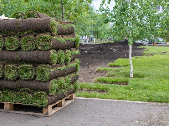 sod landscaping in Champlin