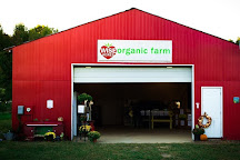 Wise Acres Organic Strawberry Farm, Indian Trail, United States