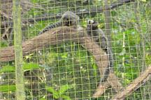 Zoo Ave, Alajuela, Costa Rica