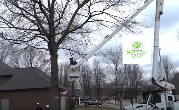 Tree trimming service by Steadfast Tree Care Stafford