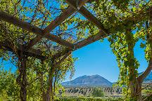 Sutcliffe Vineyards, Cortez, United States